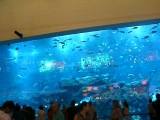 самый большой аквариум в мире в здание Буш-Халифа в Дубае